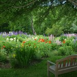 The perennial garden.
