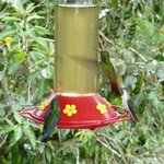  humming birds get dangerously close :)