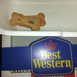 moldy dog cookie that hotel ''generously'' gave me at check in