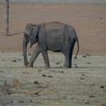  A lone elephant at the sunset point