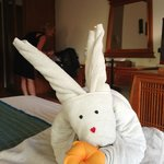  Nice bunny image on bed