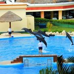  Dolphins from our balcony view in villa 32