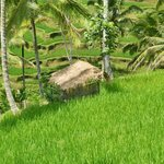 Bali Yowana Tour - Day Tours