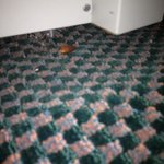 Foto Hampton Inn Kansas City/Shawnee Mission