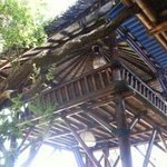 Treehouse in the beach front restaurant