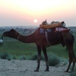 """""""Sunset and Camel is perfect"""""""
