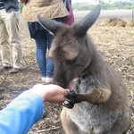  Hand feeding Australia wild life
