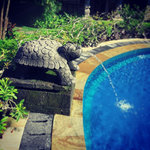 turtle by the pool