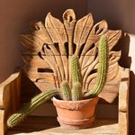  Borrego Valley Inn Cactus and Wooden Chair