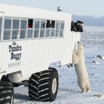 Buggy Love in Churchill, Manitoba