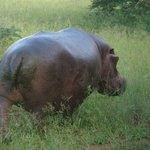 Hippo away for diiner.