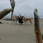 Driftwood Beach on Jekyll Island at Sandy Paws