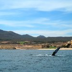  Whale we got to see on Cabo Blue
