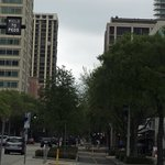 The trail separates foot and bike traffic from cars, even in the heart of downtown St. Pete. Coo
