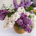 Lilacs from Chris