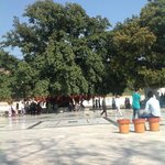 Mata Mansa Devi Mandir - a huge wish tree in the second section