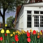 Brandon Inn Tulips