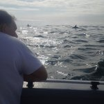 Cruise alongside more than 50 dolphins