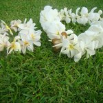  Leis made from plumeria at Kona Sugar shack