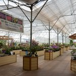 Inside the nursery - orchids on display & for sale