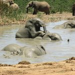  At the water hole