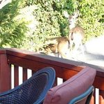 Deer outside the Lobby