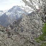 Imlil valley in bloom