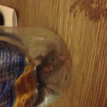  Mouse we caught in the room!