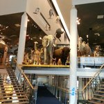  Naturalis