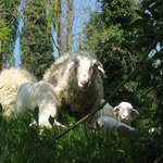 Our eco - lawn mowers
