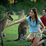 Meet the locals at Lone Pine Koala Sanctuary