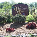 Started the Vineyard in 1996