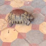friendly tortoises on the roof terrace