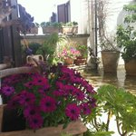 Spring 2013.. flowers' explosion on your private terrace
