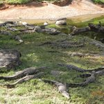 Crocodile sanctuary on the Hotel grounds