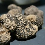  Truffles that we found.