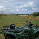 Aloe farm: Curacao via ATV!