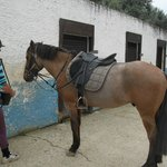 Albufeira Riding Centre