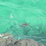 "Sea turtles below ""The Cliffs"""