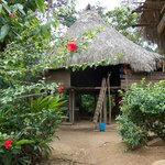  A thatched roof home in the Embera Village