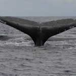 One if the many whales cpt Steve's