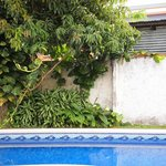 Swiming pool with fruit trees surrounding it