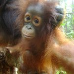 Wild Orangutan Tours - Private Day Tours