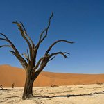 Death Vlei with its 750 old trees just a short drive away