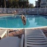  a heron relaxing by the hotel pool