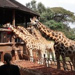 Half-Day Walking Tour: Nairobi Experience
