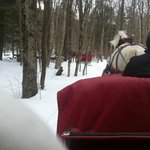  Gentle Giants Sleigh Rides Dash Through the Snow