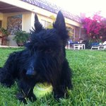 Scottie the dog of the house