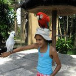  bird park