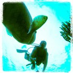 GoPro shop of a Grouper while diving with Aqua Safari